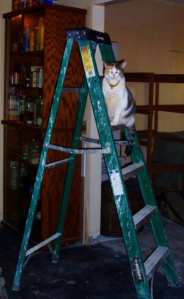 sarah ladder