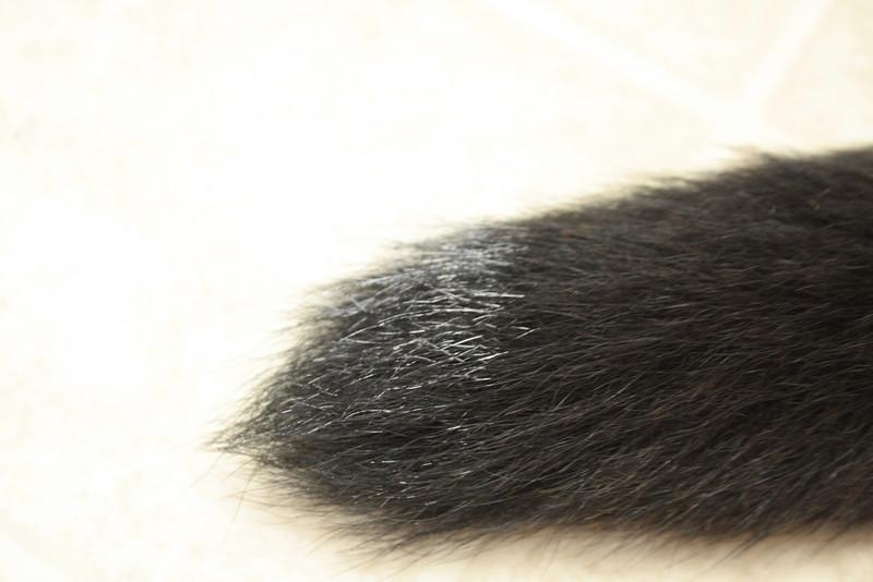 Paint on Ronan's tail