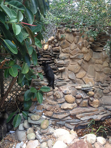 Super cheesy waterfall feature off the back porch. Figgy likes to climb it and catch lizards between the rock cracks. It's basically a lizard city.