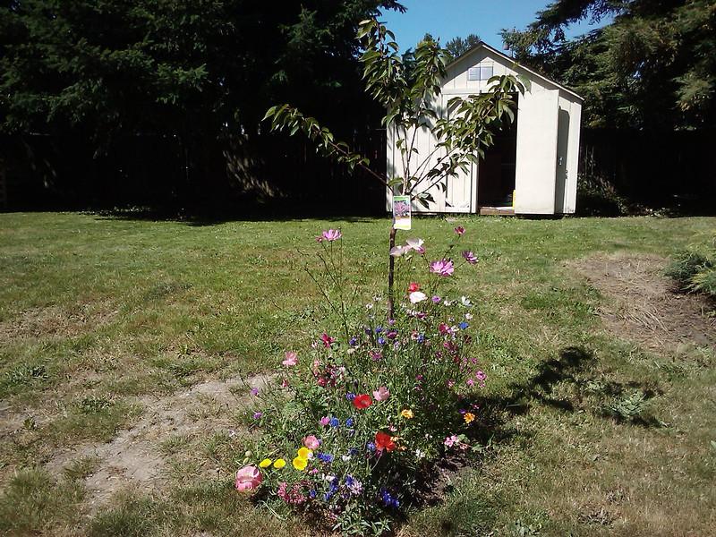 Cherry tree and wildflowers