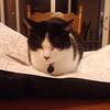 Supervisor Kitty