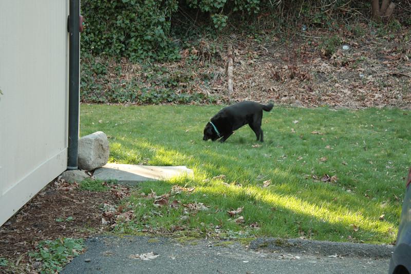 Ronan in the yard