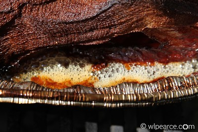 As you can see, the bottom of the turkey actually fries in the hot butter.  If you're not a dark meat fan, you may be after cooking this way.  The bottom of the turkey (mostly dark meat) comes out unbelievably moist.