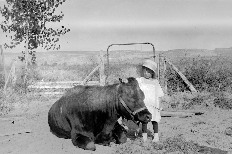 """Elizabeth (Betty) Von Gausig nee Clark, and the family milk cow, """"Bossie"""" at the Presbyterian Mission in Fort Defiance.<br /> <br /> 3.25x5.5 negatives shot by Howard Clark on the Navajo Reservation near Window Rock, AZ and Fort Defiance, AZ, ca. 1913-35 while he was a Presbyterian minister there. These negatives belong to his daughter, Betty Von Gausig."""