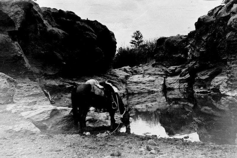 """According to Elizabeth Clark Von Gausig: """"Papa's horse """"Prince"""" at a pool outside Flagstaff, Arizona."""" <br /> <br /> 3.25x5.5 negatives shot by Howard Clark on the Navajo Reservation near Window Rock, AZ and Fort Defiance, AZ, ca. 1913-35 while he was a Presbyterian minister there. These negatives belong to his daughter, Betty Von Gausig."""