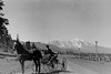 Near Flagstaff, Arizona. San Francisco Peaks in the background.<br /> <br /> 3.25x5.5 negatives shot by Howard Clark on the Navajo Reservation near Window Rock, AZ and Fort Defiance, AZ, ca. 1913-35 while he was a Presbyterian minister there. These negatives belong to his daughter, Betty Von Gausig.