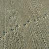 Birdprints in wet cement