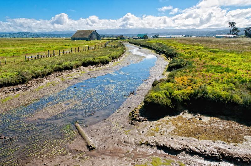 Arcata Bottoms 2012-06 004 Humboldt-CA-USA_nikEP-TC