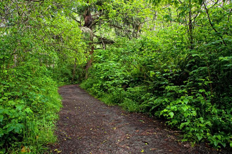 Elk Head Trail at Trinidad, Humboldt County, California, May 2012.