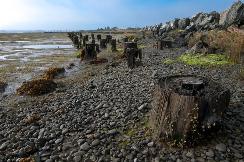 Rotting pilings near Samoa Bridge, Humboldt County, California, September 2011.