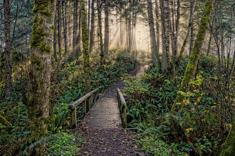 Forest Walkway at College Cove, Humboldt, January 2012 [College Cove 2012-01 HDR 09-TM-TC Humboldt-CA-USA&3]