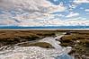 Humboldt Bay 2012-04 014_TM CA-USA