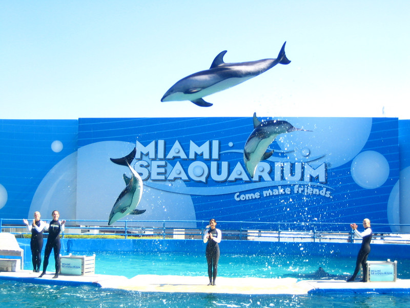 Lost !:<br /> 3 x Dolphins.<br /> <br /> Last seen in the pool...