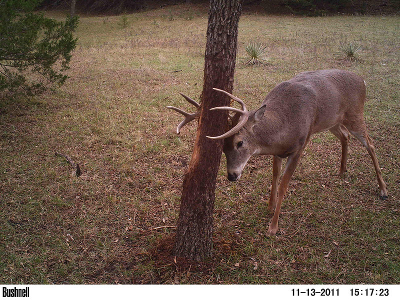 A well placed trail camera got some great pictures.
