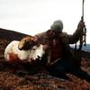 My Dall ram from the Yukon's Ruby Range