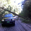 Blocked roads with many trees down