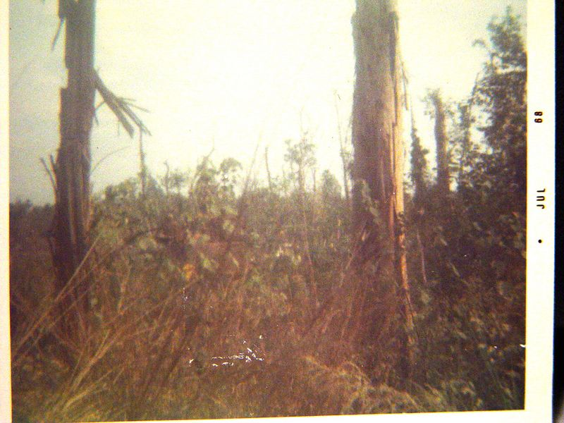When we opened up with the fire power our Tracks were capable of not much could stand up to it.  Heavy jungle looked like this after we tore it up with our guns.