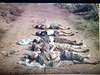 NVA-VC killed while sweeping through a village, these NVA-VC had terrorized the local village for years forcing the young men to fight against their will and taking from the village food and other supplies to keep them in action.