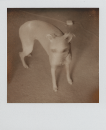 Testing for the Impossible Project, Feb 2010
