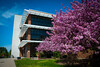 Campus Scenes - Spring