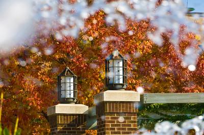 331641805_215892745_2007_fall_campus_scenes0535