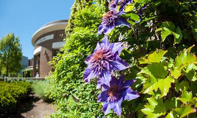Purple flowers outside of Hulman Memorial Student Union in Spring