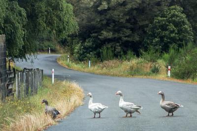 South Island Traffic Jam