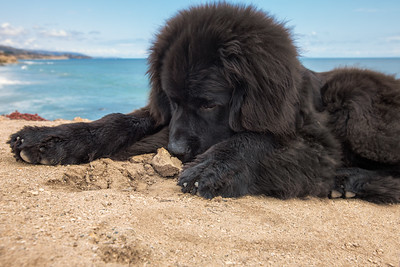 """Mom Says They're Called """"Sand Crabs."""""""
