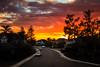 Sunset In The Neighborhood