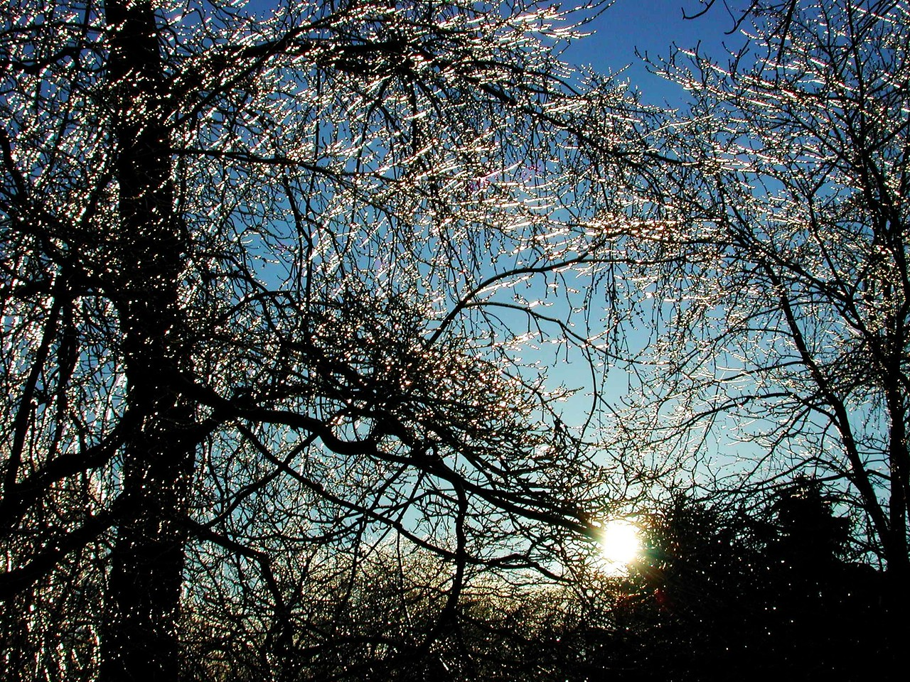 The early morning sun glistens off the branches covered with ice.