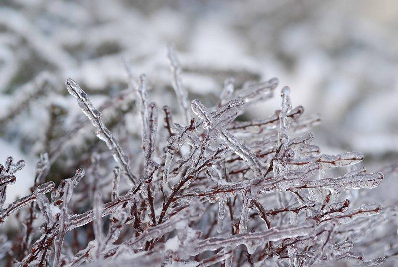 IceStormFeb2007069
