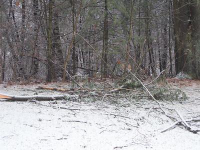Ice Storm, December 11, 2008