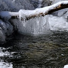 Natural Ice Sculpture on a Limb, Gt. Smoky Mts.