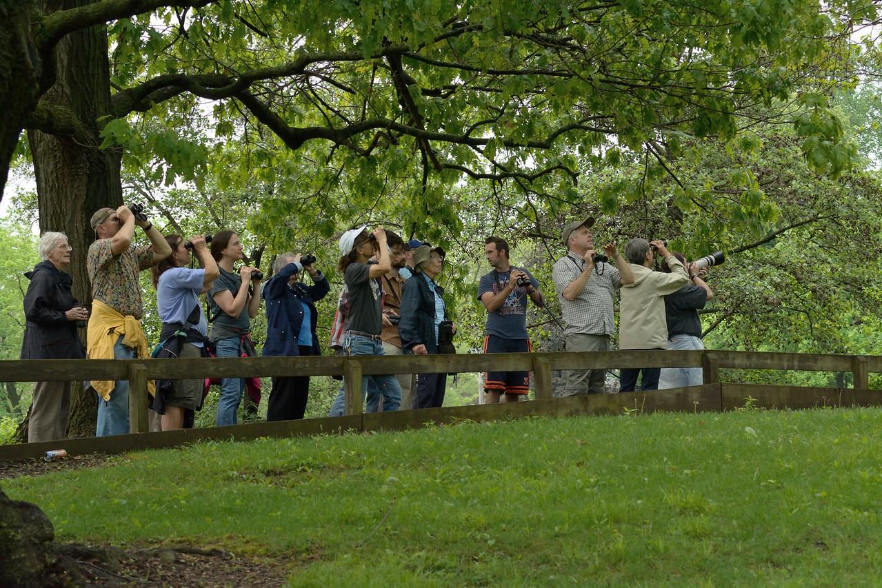 Birders in Urbana, May 10, 2015