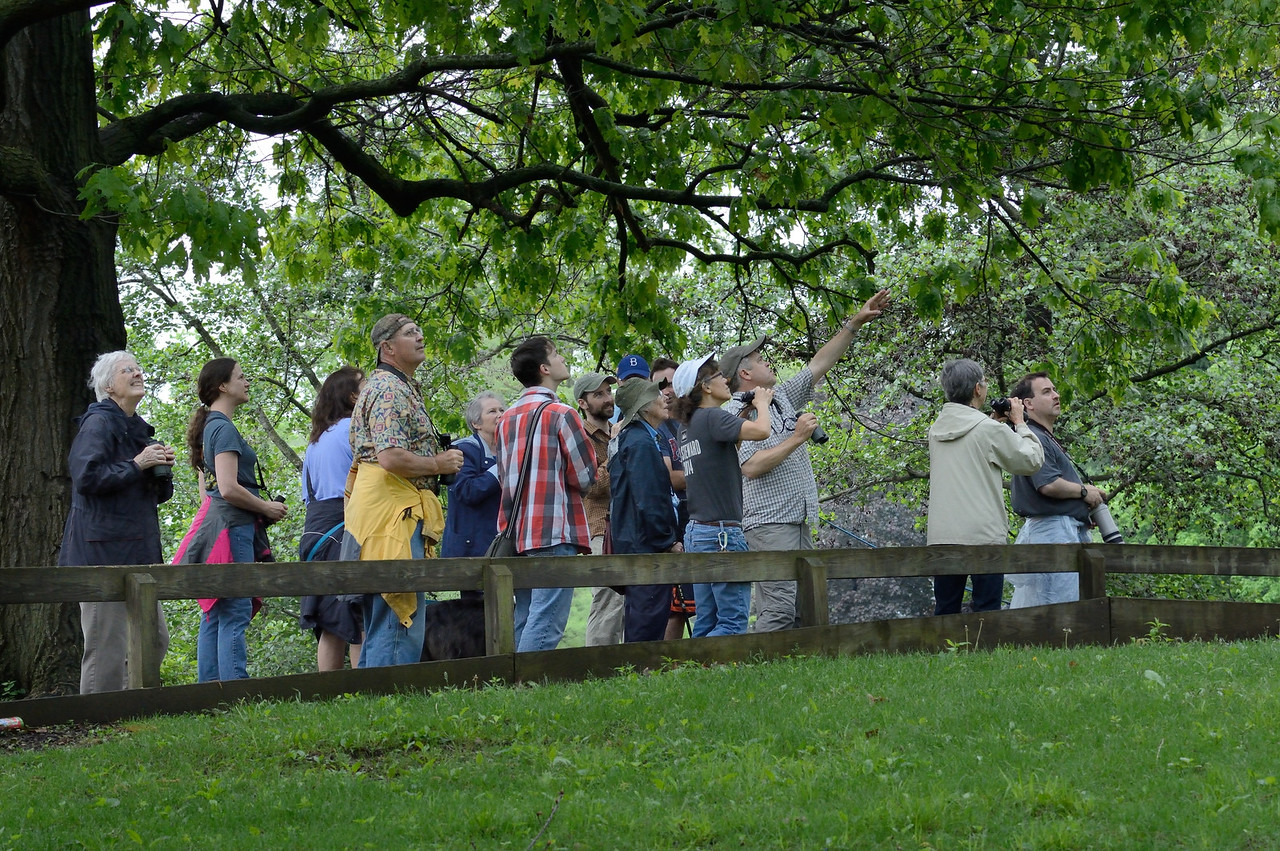 Look there!<br /> Birders in Urbana, May 10, 2015