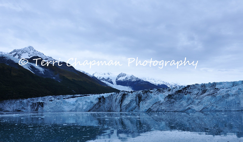 """This image is of the Glaciers of College Fjord. College Fjord is a fjord located in the northern sector of Prince William Sound in Alaska. The fjord contains five tidewater glaciers (glaciers that terminate in water), five large valley glaciers, and dozens of smaller glaciers, most named after renowned East Coast colleges. On the northwest side of the fjord, the glaciers were named after the women's colleges, such as Smith, Bryn Mawr, Vassar, Wellesley, Barnard, and Holyoke. On the southeast side, the glaciers are named after men's colleges Harvard, Yale, Amherst, and Dartmouth. College Fjord was discovered in 1899 during the Harriman Expedition, at which time the glaciers were named. The expedition included a Harvard and an Amherst professor, and they named many of the glaciers after elite colleges. According to Bruce Molina, author of Alaska's Glaciers, """"They took great delight in ignoring Princeton.""""<br /> <br /> Some of these glaciers have retreated since the original Harriman Expedition, but not the largest of them: Harvard. Harvard is 1 1/2 miles wide, approximately 225 feet high at its terminal face, stretches below the waterline up to about 120 feet, and reaches back to the Chugach Icefield nearly 24 miles away. This giant of College fjord is slowly advancing, calving literally tons of ice into the fjord each day. These glaciers parade down, some of them 3,700 feet to the mile, from the steep mountains. No place else is there such a density of tidal glaciers. <br /> <br /> In 1964 College Fjord was the epicenter of the Good Friday Earthquake, the most powerful earthquake in U.S. history."""