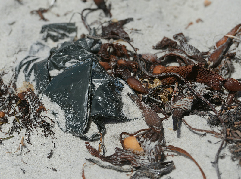 Dog Poop Bags on Carmel Beach
