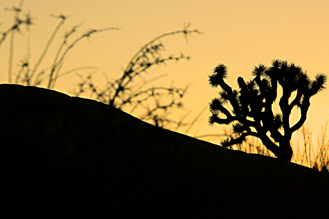 """Currently awaiting a witty name.  Please temporarily refer to me as """"Yellow"""" until inspiration sets in.<br /> <br /> <br /> <br /> Joshua Tree national park."""