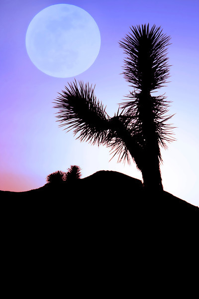 Supermoon May 5, 2012~<br /> <br />  Joshua Tree