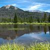 Grand Lake Moose Landscape