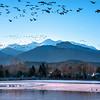 Flock to the Lake~Lake Loveland in Loveland, CO.