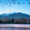 Flock to the Lake~Lake Loveland in Loveland, CO.