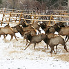 """Par 4 the Course""<br /> <br /> ~Estes Park, CO.<br /> <br /> A typical scene in this mountain town....winter golfers beware!"