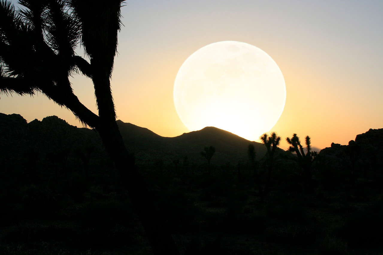 Cinco Supermoon~ May 5, 2012<br /> <br /> Joshua Tree National Park