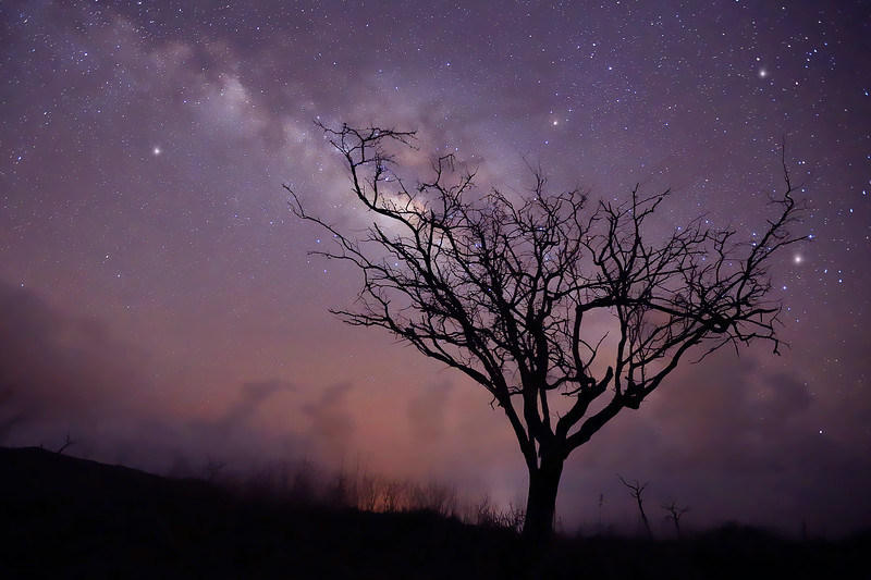 """Kiawe Tree & Milky Way"" - The Milky Way is clearly visible in the night sky above this Kiawe Tree.   Photographed on the island of Lana'i in Hawaii."