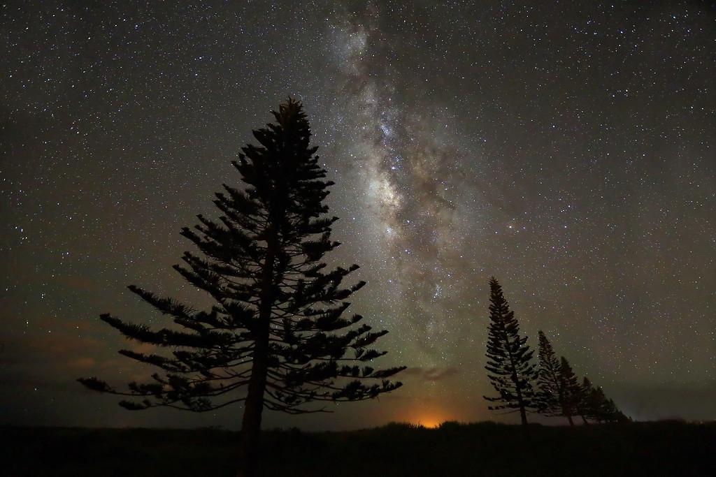 Milky Way over Cook Pines - Island of Lana'i, Hawaii