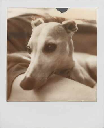 Impossible Project 600PX & PX100 Silver Shade