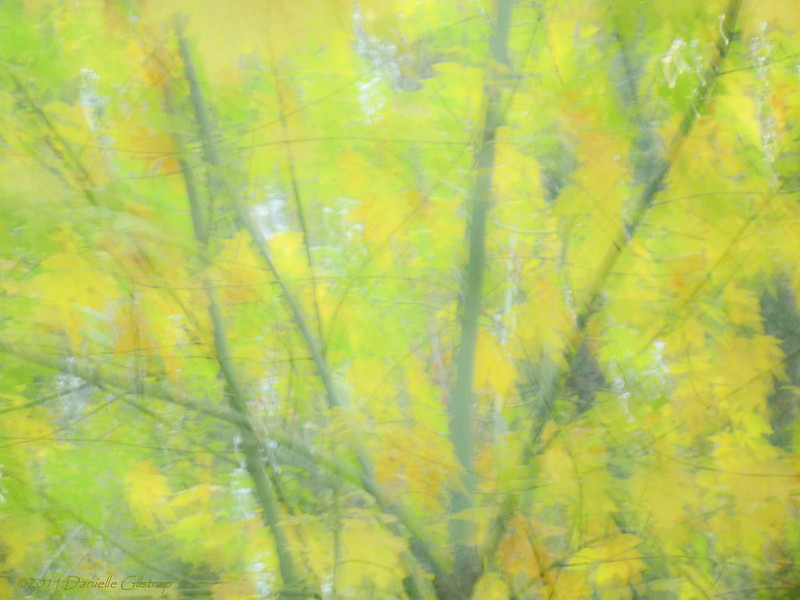 Maple Impressions<br /> by Danielle Gilstrap<br /> <br /> October 2011<br /> Yosemite Valley