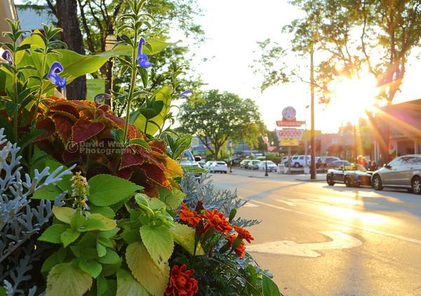 West Crescent Blvd. in Summer - Glen Ellyn