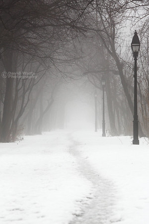 Into the Fog of Winter